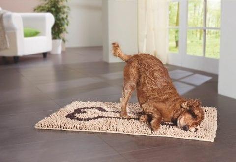 Få gode råd til at undgå lopper og flåter hos dit kæledyr