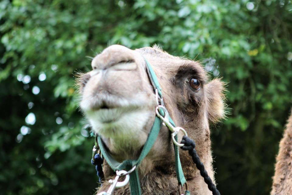Pangea Park – Dyreparken hvor du kommer helt tæt på