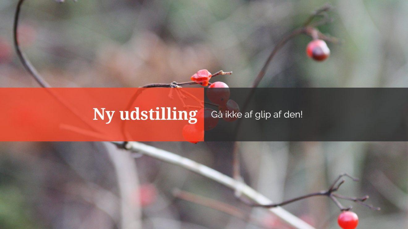 """Himlens Fri Fugle"" – akvareludstilling i Galleri Bødkergården"