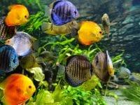 Akvarium, foto: MiniZOO