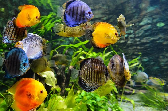 Køgenserne går ofte til læge: Akvarier har beroligende effekt på patienter