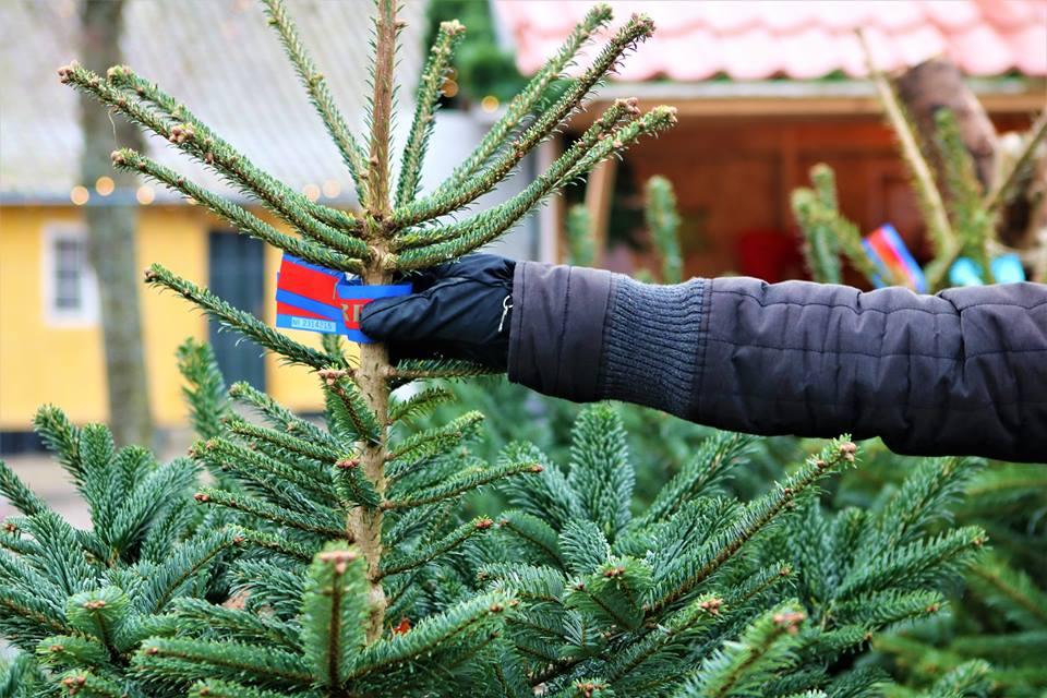 Juletog Køge-Rødvig og retur med juletræsfældning