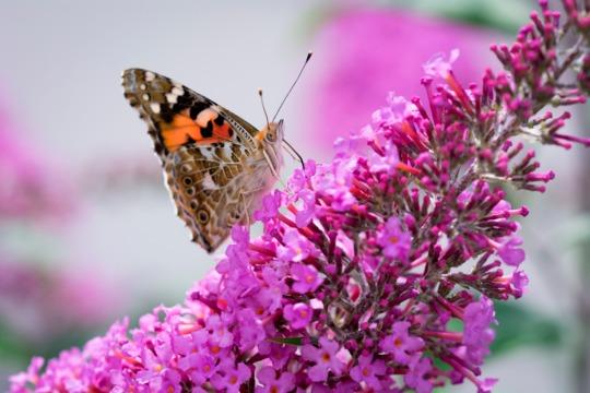 Naturen får frit spil i danske haver